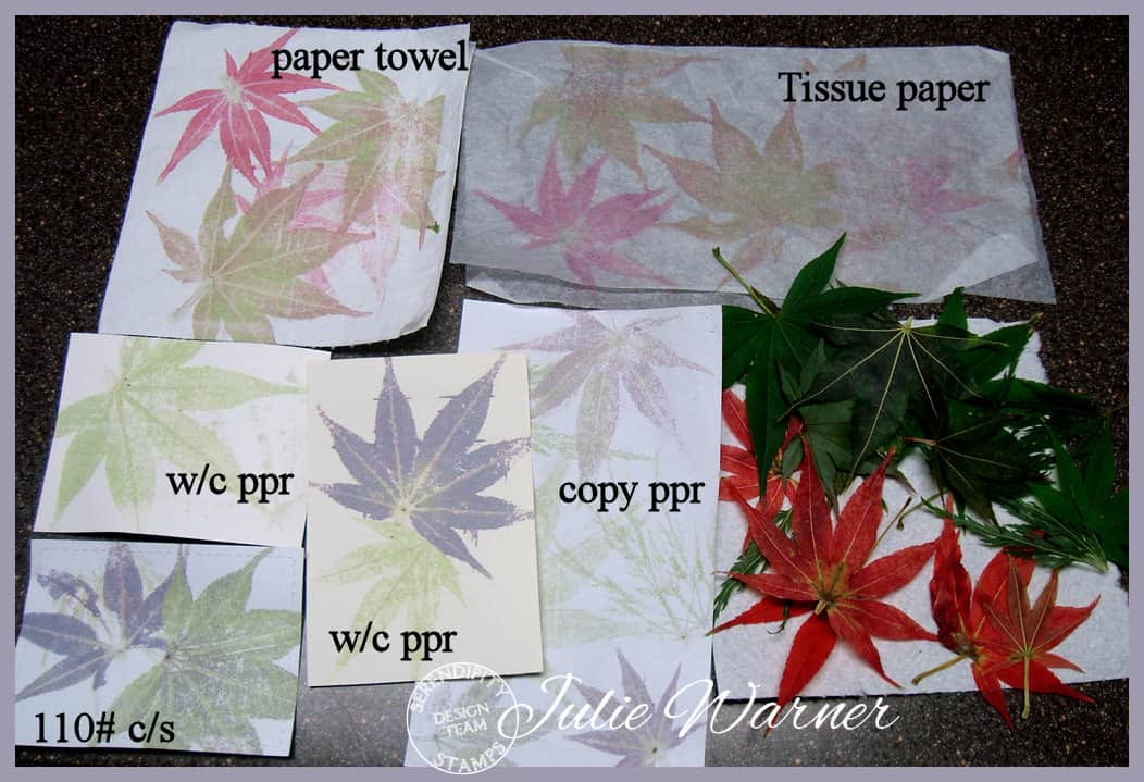 Pressed maple leaves 09769