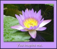 lotus-inspiration-award-from-els